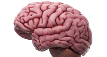 Why are there Folds in Our Brains?